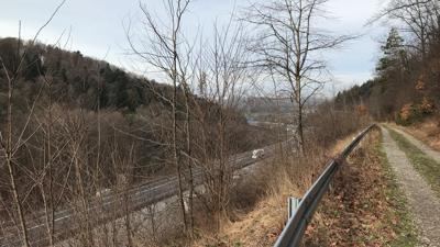 Ein Waldrand entlang der Autobahn