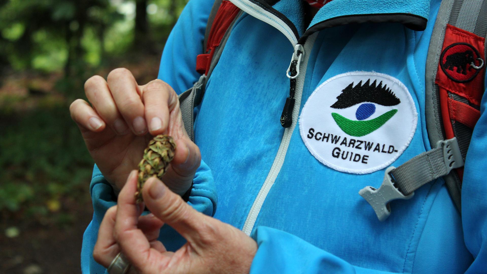 Schwarzwald-Guide zeigt Zapfen