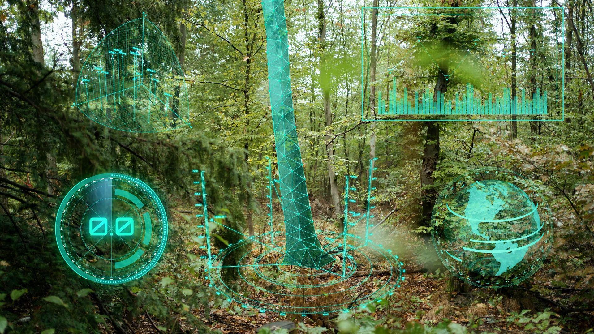 Datenfutter: Um ein Assistenzsystem für die bessere Bewirtschaftung der Wälder zu entwickeln, muss das Programm mit möglichst vielen Daten aus den Baumbeständen bestückt werden.