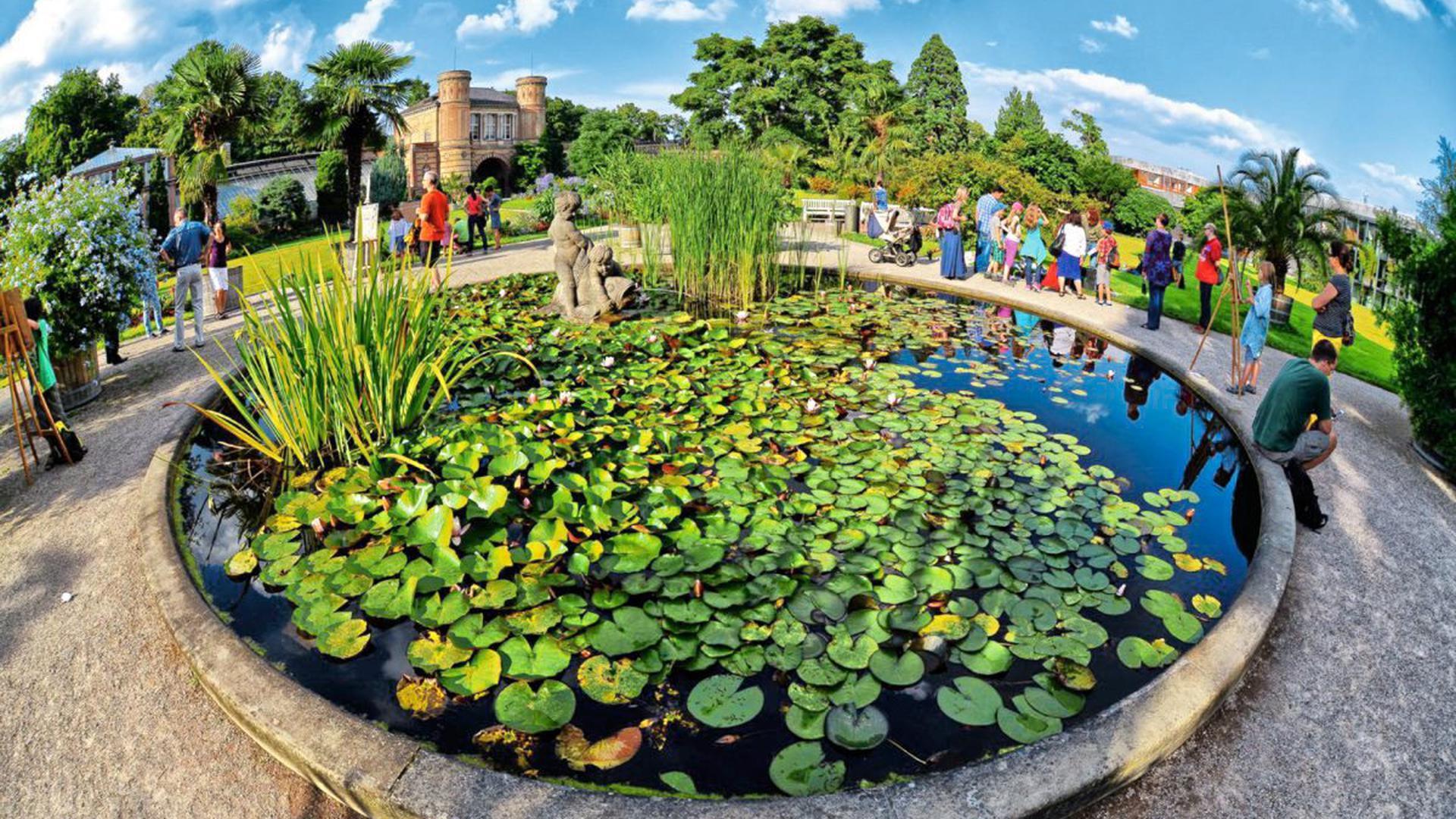 Rund um den Seerosenteich lassen sich im Botanischen Garten tolle Aufnahmen machen.