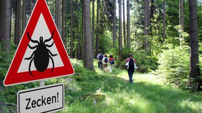 Schild mit Zeckenwarnung in gefährdetem Gebiet im Wald.