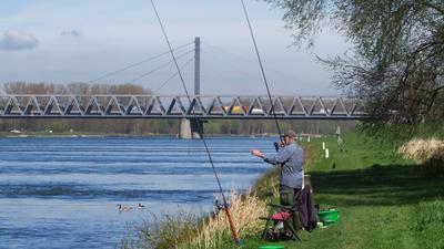 Der Rhein bietet den fast 6.000 Mitgliedern des Anglervereins Karlsruhe ein abwechslungsreiches Revier. Über 60 Fischarten leben in dem Strom.