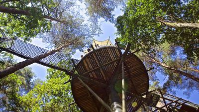 Sicher im Adlerhorst: Von der Aussichtsplattform des Baumwipfelpfads beim Biosphärenhaus in Fischbach bei Dahn können Besucher einen Blick in die Tiefe und in den Blätterwald wagen.