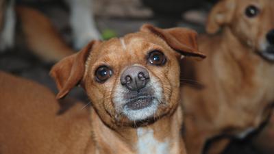 Der ehemalige Straßenhund Bodo macht seiner Halterin viele Sorgen. Er ist schwer traumatisiert und außerdem krank.