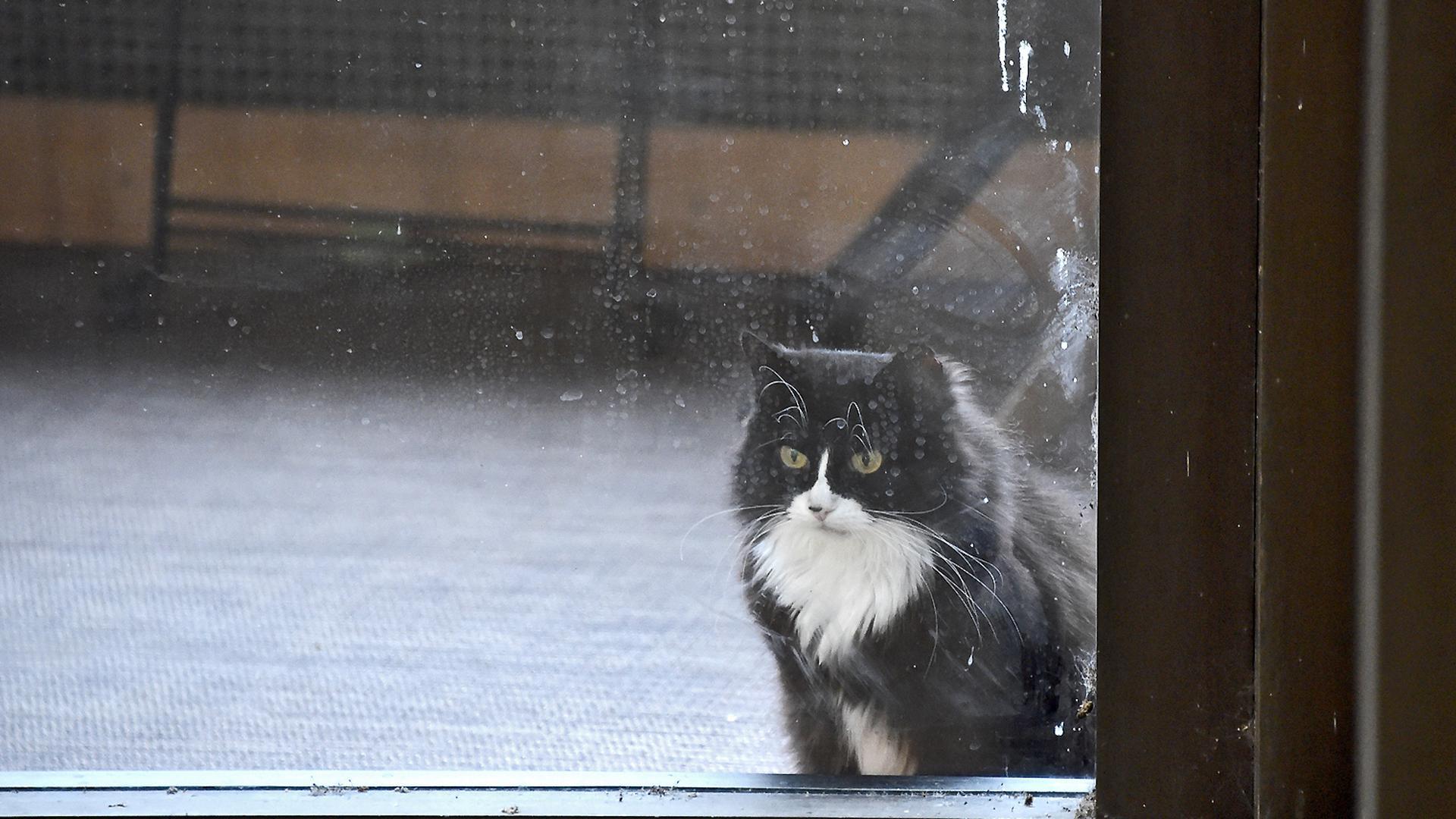Eine schwarz-weiße Katze sitzt vor einem geschlossenen Fenster.