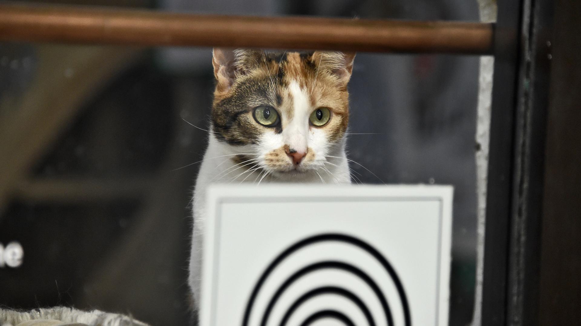 Ein buntes Kätzchen sieht durch die Fenster des Cats Café nach draußen.