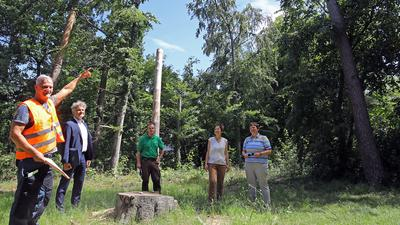 Ortsbegehung zum Zustand der Bäume im Hardtwald.