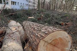© Jodo-Foto /  Joerg  Donecker// 23.02.2021 Gefaellte Baeume in der Waldstadt, Foto:  Schneidermuehler Strasse,                                                             -Copyright - Jodo-Foto /  Joerg  Donecker Sonnenbergstr.4  D-76228 KARLSRUHE TEL:  0049 (0) 721-9473285 FAX:  0049 (0) 721 4903368  Mobil: 0049 (0) 172 7238737 E-Mail:  joerg.donecker@t-online.de Sparkasse Karlsruhe  IBAN: DE12 6605 0101 0010 0395 50, BIC: KARSDE66XX Steuernummer 34140/28360 Veroeffentlichung nur gegen Honorar nach MFM zzgl. ges. Mwst.  , Belegexemplar und Namensnennung. Es gelten meine AGB.