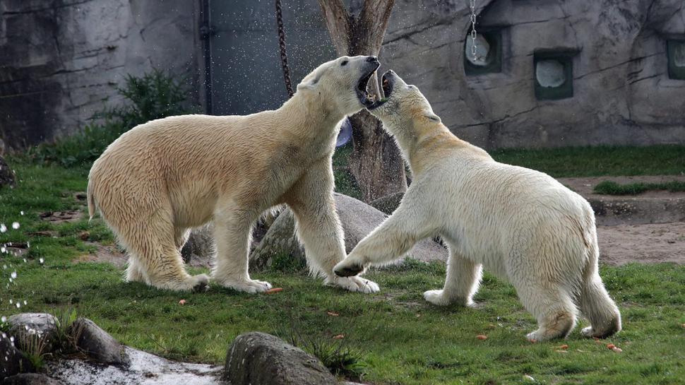 Kap und Nika im Zoo Karlsruhe