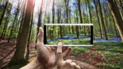 """Bei einem Spaziergang in Wald und Wiese können Apps wie """"Flora Incognita"""" dabei helfen, diese Frage zu beantworten und Pflanzen zu bestimmen."""