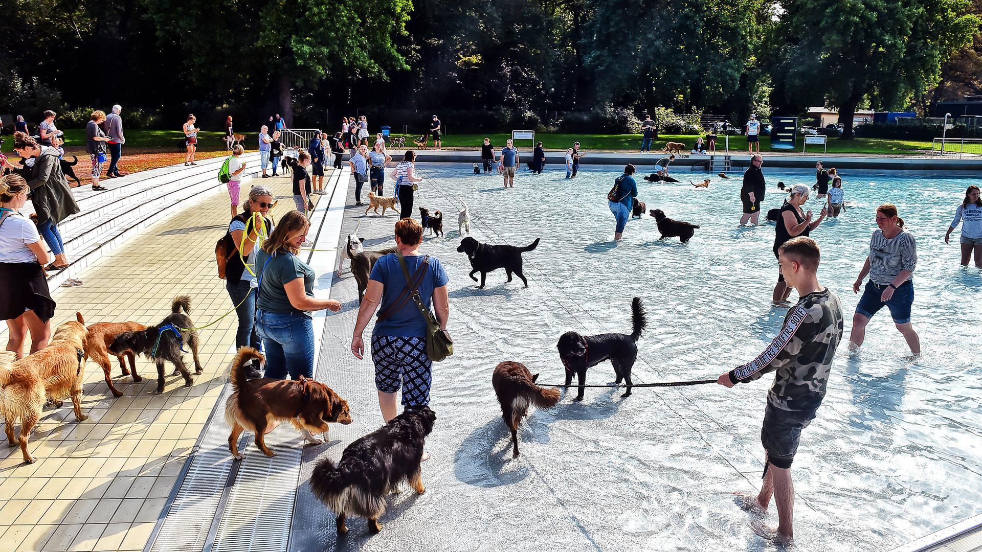 Zwei- und Vierbeiner tummeln sich im ungechlorten Wellenbecken: Das traditionelle Hundeschwimmen im Rheinstrandbad Rappenwört konnte unter Einhaltung der Corona-Regeln stattfinden.