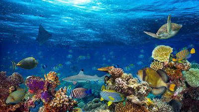 Farbenprächtiges Schauspiel unter Wasser:  Bunte Korallen sind typisch für tropische Gewässer. Sie bieten Schutz und Nahrung für unzählige Meeresbewohner. Doch die Versauerung der Ozeane und die steigenden Wassertemperaturen setzten ihnen zu.