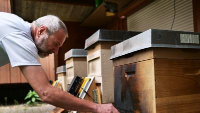 Ulrich Steiert beim Betrachten des Schadens an den Bienenstoecken Brandanschlag auf Bienenvoelker im Hardtwald