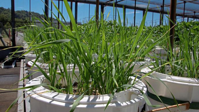 Wie verhalten sich PFC im Ackerboden und in Nutzpflanzen?