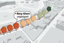 Eine interaktive Karte zeigt, wo in Karlsruhe die Problembäume stehen.
