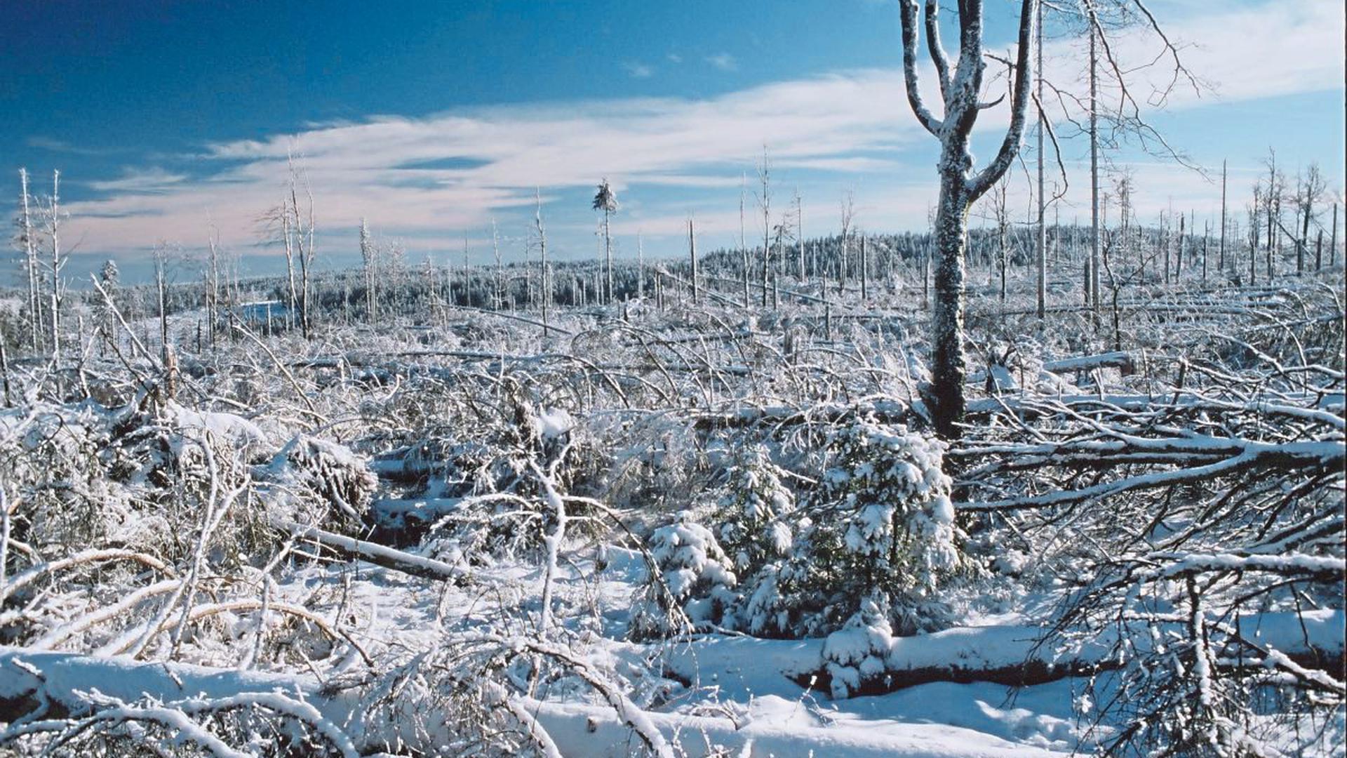 Noch zwei Jahre nach dem Orkan bot sich ein Bild der Zerstörung – hier in winterlichem Weiß.