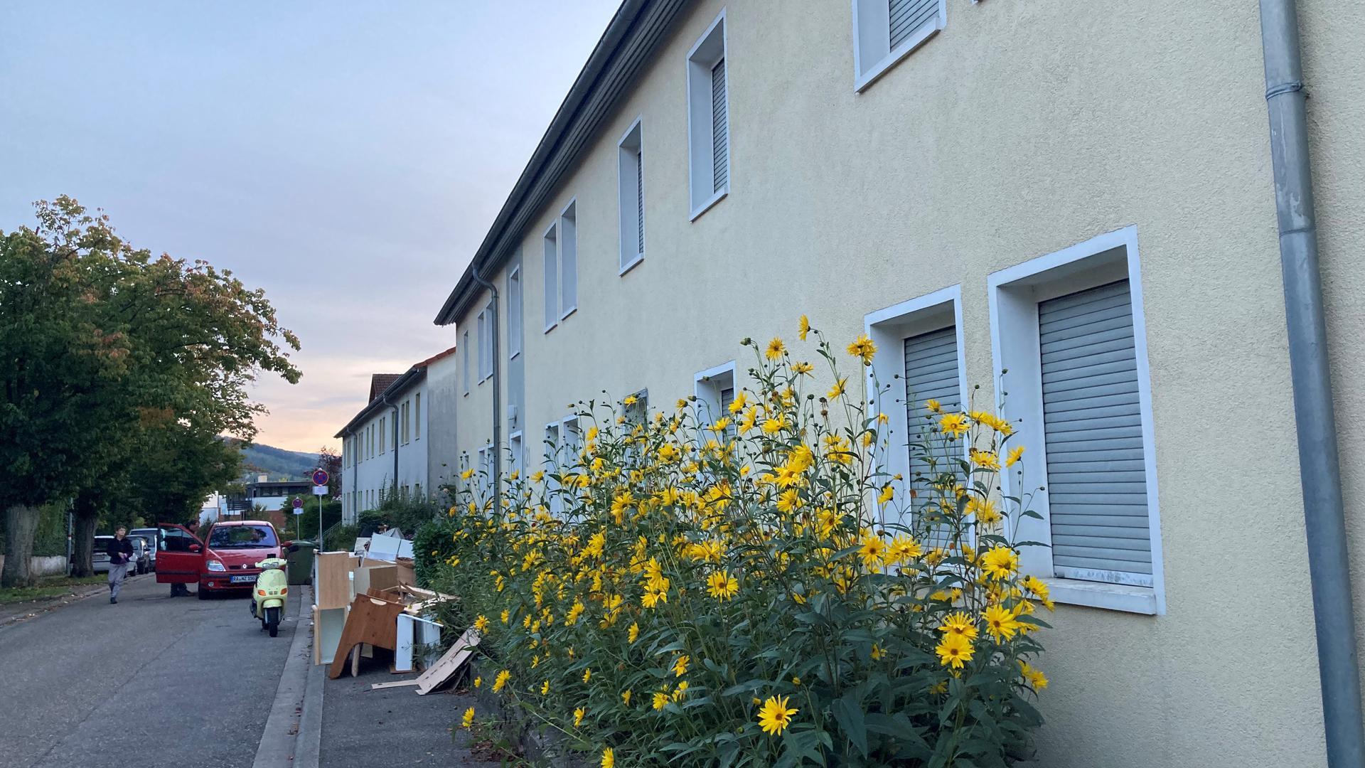In den Wohnungen der Alba Baugenossenschaft in der Adolf-Kolping-Straße sind die Rollläden runtergelassen, vor den Fenstern wachsen Blumen in die Höhe.