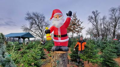 Hingucker: Beim Weihnachtsbaumverkauf am Seehof winkt ein übergroßer Nikolaus den Kunden zu.