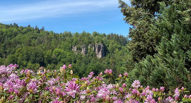 Rosa Blüten im Vordergrund Felsmassiv mit Bäumen