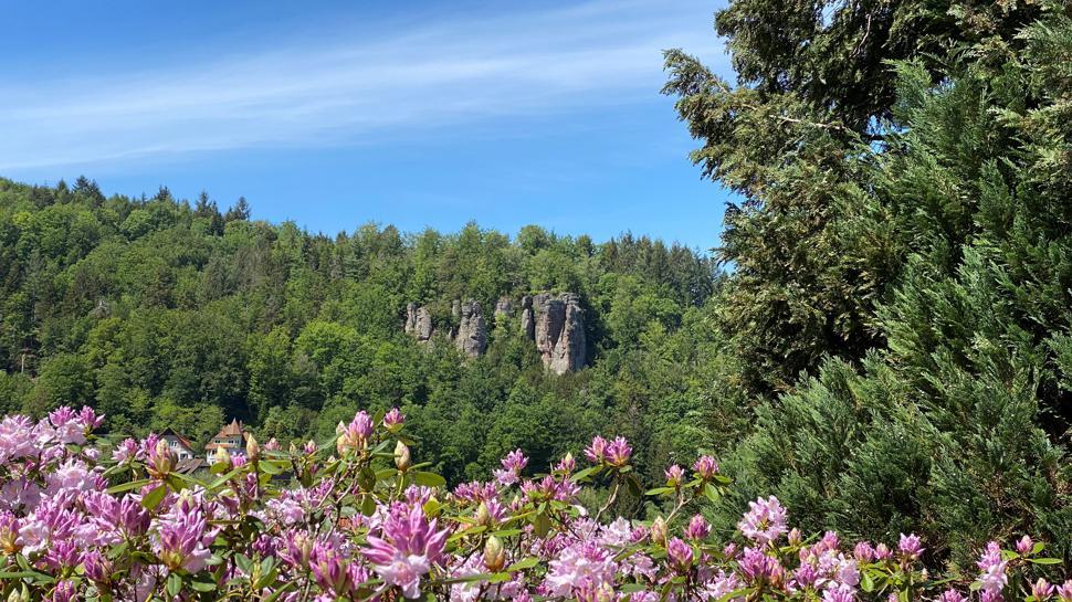Felswand mit rosa Blütenpracht