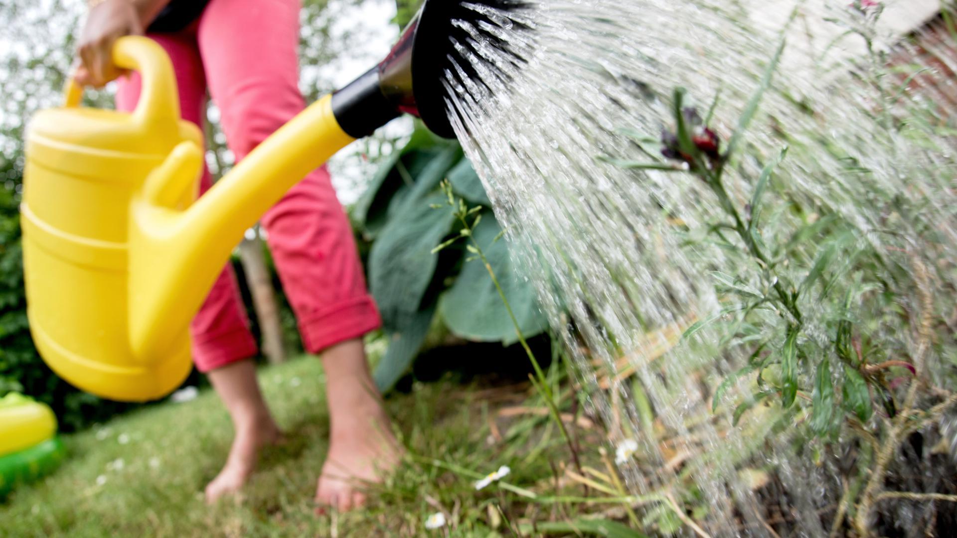 29.05.2018, Niedersachsen, Laatzen: Eine Frau gießt die Blumen in einem Garten mit einer Gießkanne. Die anhaltende Trockenheit lässt den Wasserverbrauch in Niedersachsen steigen. Foto: Hauke-Christian Dittrich/dpa ++ +++ dpa-Bildfunk +++