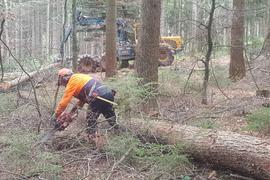 Waldarbeiter beim Holzeinschlag