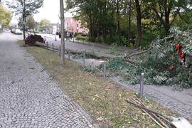 Baumsturz Sturm Ignatz