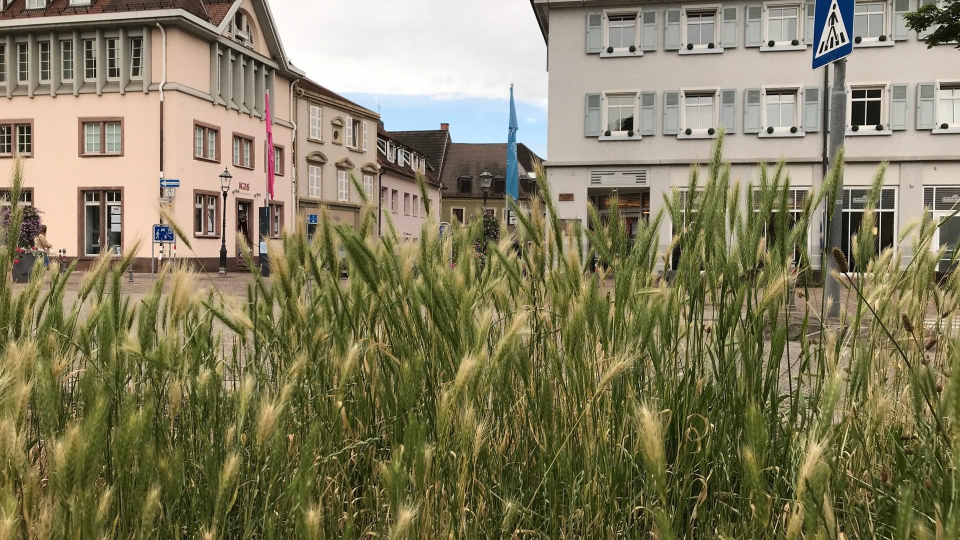 Gräser an der Straße
