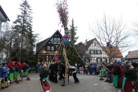 Hexen stellen Narrenbaum