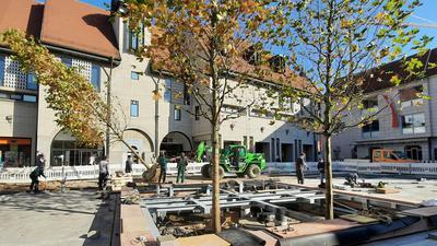 Bäume auf einem Platz