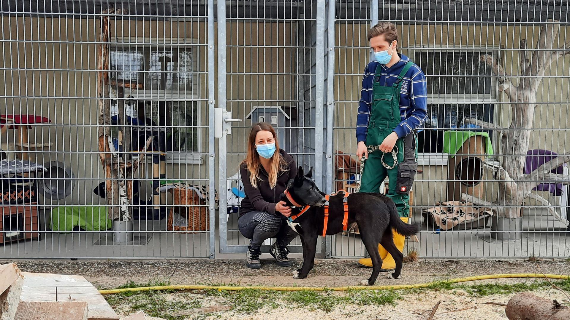 Frau und Hund mit Mann