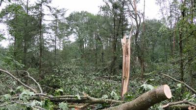Wald mit zerstörten Bäumen