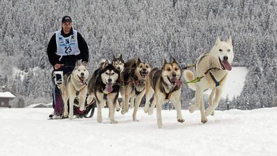 Kommendes Rennen ist abgesagt: Spannende Schlittenhunderennen haben Tradition im Höhenort Dobel. Die Aufnahme zeigt eine Veranstaltung aus dem Jahr 2012.