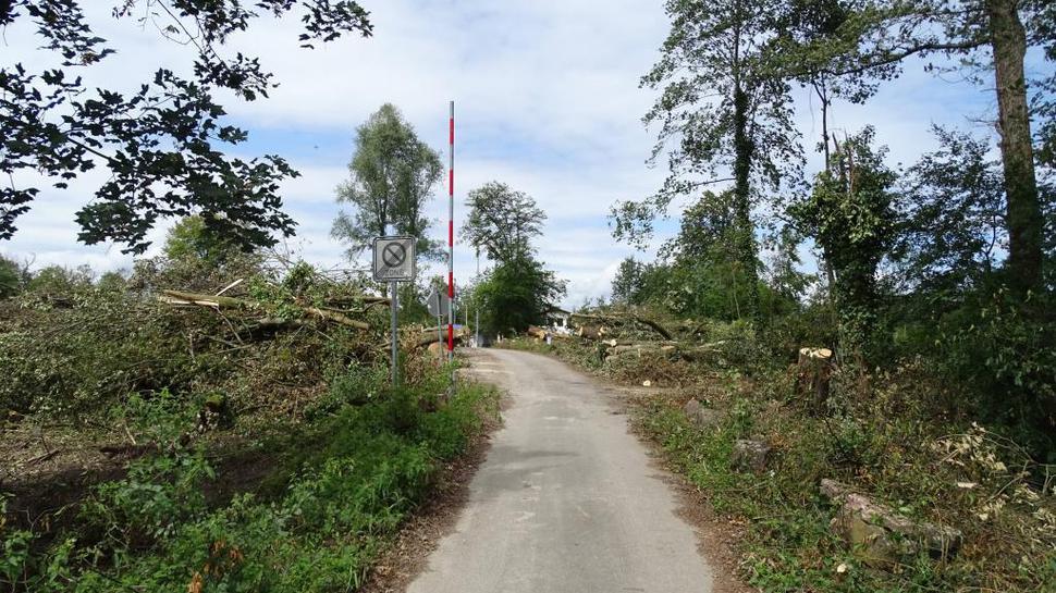 Freier Blick: Selbst 250 Jahre alte Eichen fällte der Sturm der vergangenen Woche hier am Eingang zum Gelände des FV Sulzbach im Hardtwald.
