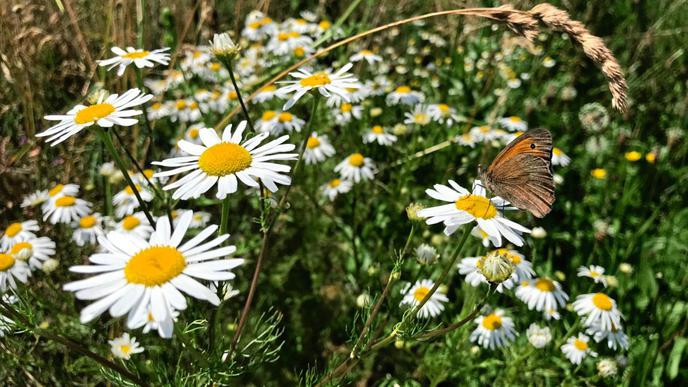 Der Artenreichtum in Spessart äußert sich unter anderem in der großen Population an Schmetterlingen.