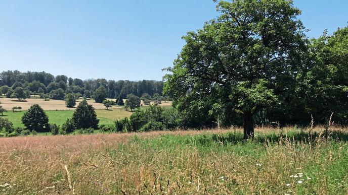 Thomas Furrer hat sich verpflichtet, auf seinen Feldern in Ettlingen-Spessart und im Albtal für Artenvielfalt zu sorgen.