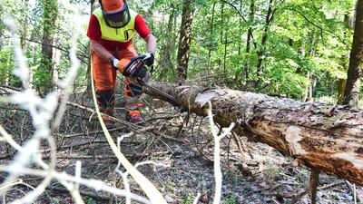 Ein Waldarbeiter arbeitet mit der Motorsäge an einem gefällten Baum.