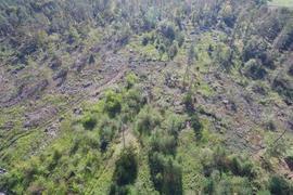 Der Sturm hat gewütet: Viel Platz ist im Malscher Hardtwald, wie diese Drohnenaufnahme zeigt. Ein Wiederbewaldungskonzept sieht die Neupflanzung von hitzeresistenten Bäumen vor.