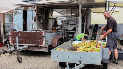 Mann und Junge bei der Apfelanlieferung