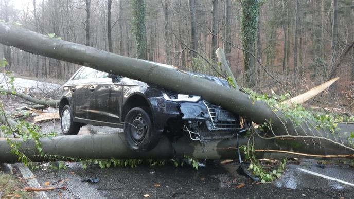 Auf der Landstraße in Richtung Ettlingen-Spessart ist ein Auto mit einem umgestürzten Baum kollidiert.