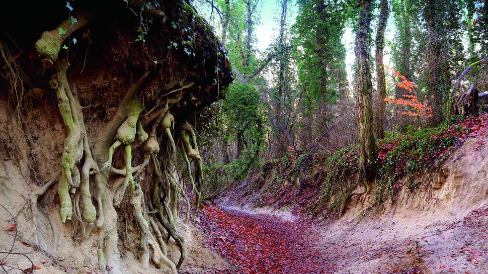 Wie im Märchen: Ein Hohlweg, der auf dem Weg zum Schloss Bruchsal erwandert wird.