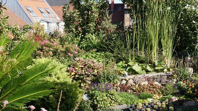 Wo bei anderen Häusern orangfarbene Dachschindeln sind, befinden auf dem Haus der Tai-Chi-Schule Karlsruhe verschiedene Pflanzen.