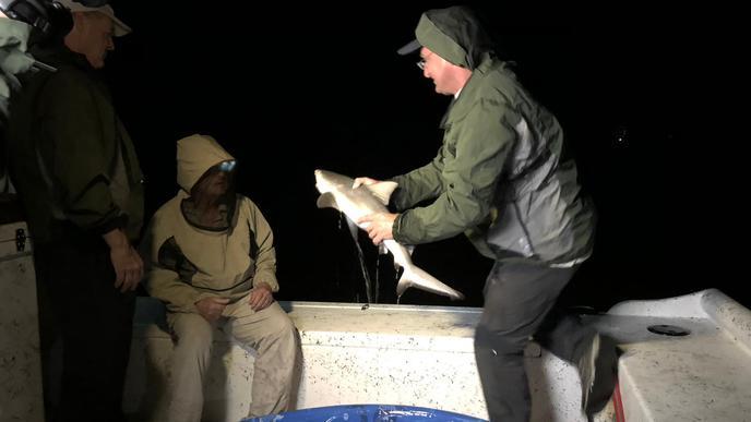 Reinschmidt mit jungem Bullenhai.