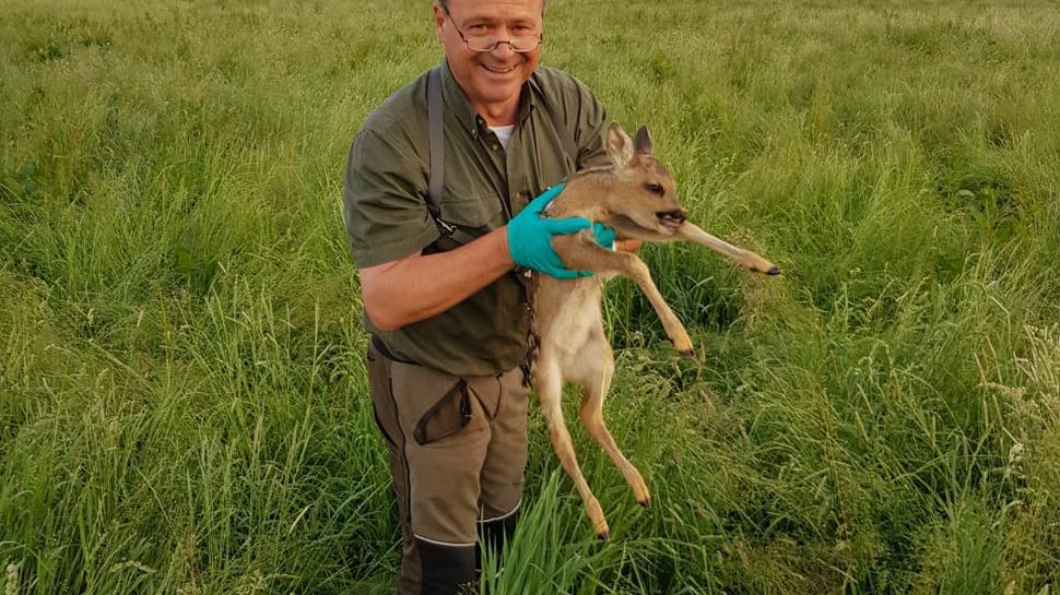 Manfred Lochbühler sucht und findet seit drei Jahren frischgeborene Rehkitze im hohen Gras.