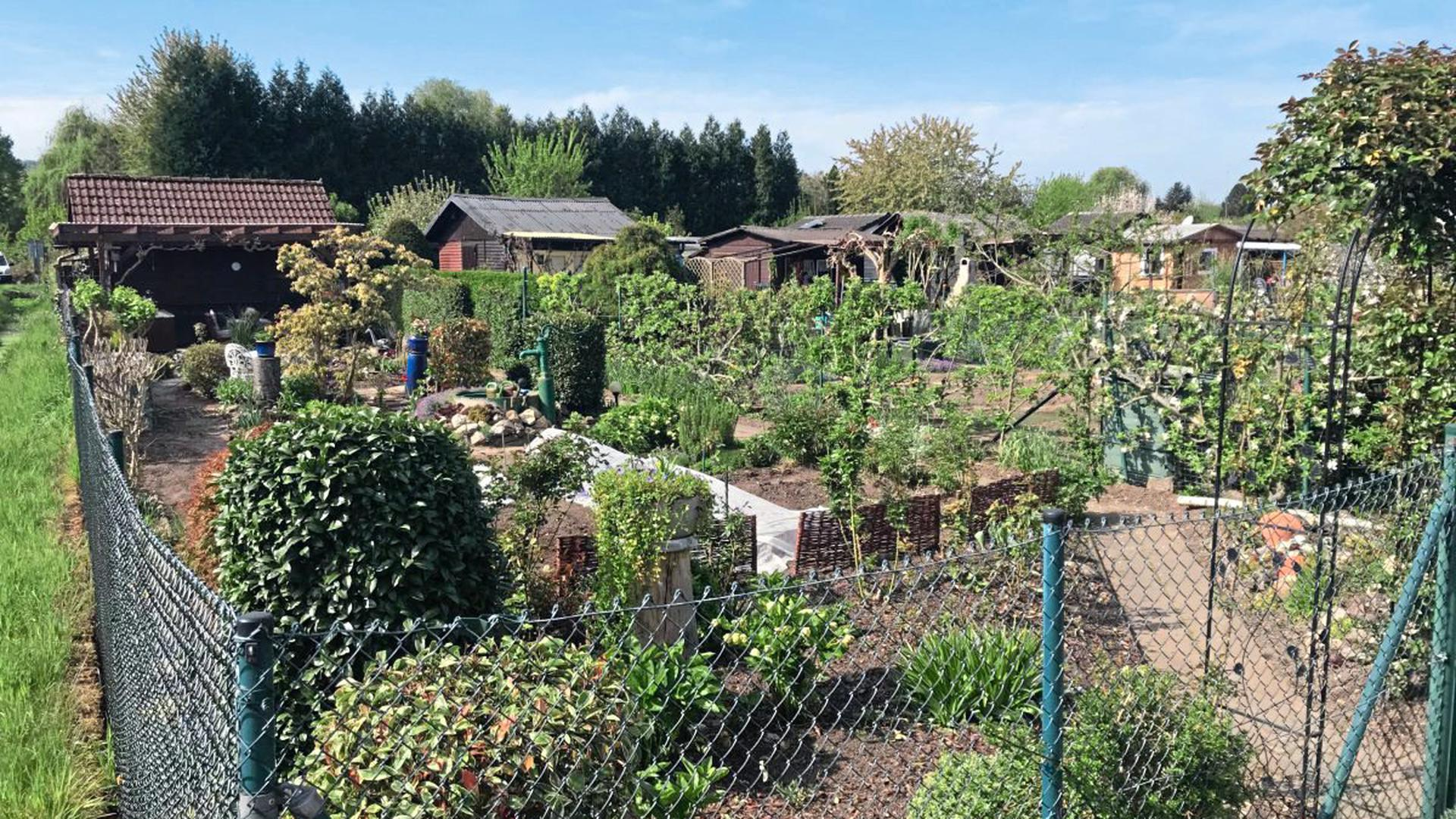 Kleingärten werden während der Corona-Krise gut gepflegt.