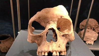 Gab es vor 7.000 Jahren in Herxheim Kannibalen? Darüber streiten die Forscher.