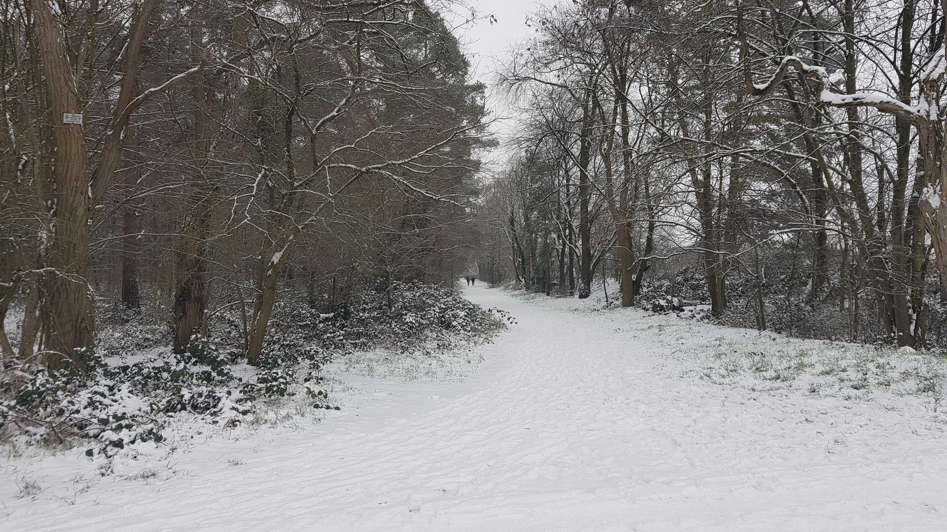 Der Karlsruher Hardtwald war am Sonntag so weiß wie schon lange nicht mehr. Unter den Füßen knirschte der frische Schnee der Spaziergänger.
