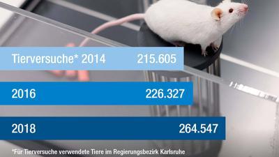 Erstmals mehr als eine halbe Million Versuchstiere in Baden-Württemberg: Die meisten Versuche genehmigt das Regierungspräsidium Karlsruhe.