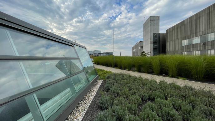 Speziell von der begrünten, rund 4.000 Quadratmeter großen Dachlandschaft, die ein wenig wie ein Park anmutet, sind viele begeistert.