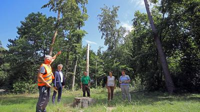 Baumexperten besichtigen Schäden in der Elbinger Straße in der Waldstadt.